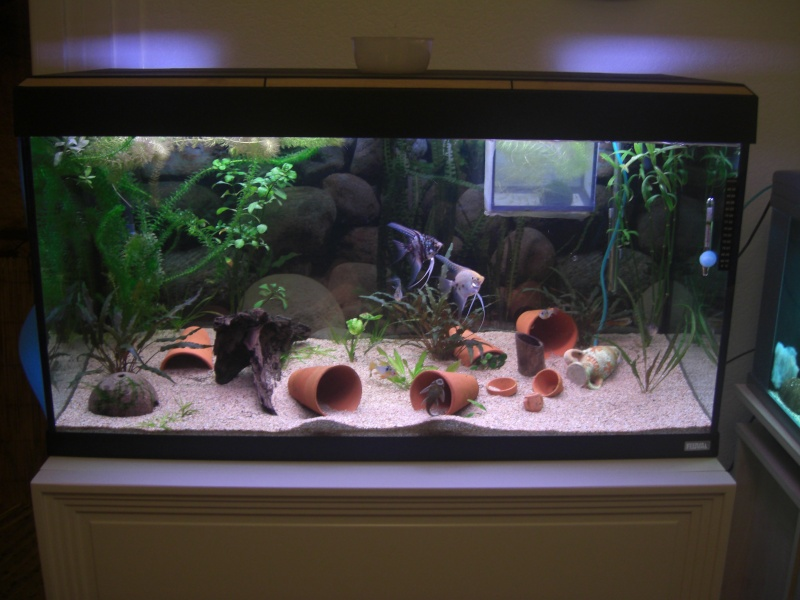 aquarium 20l pas cher. Black Bedroom Furniture Sets. Home Design Ideas