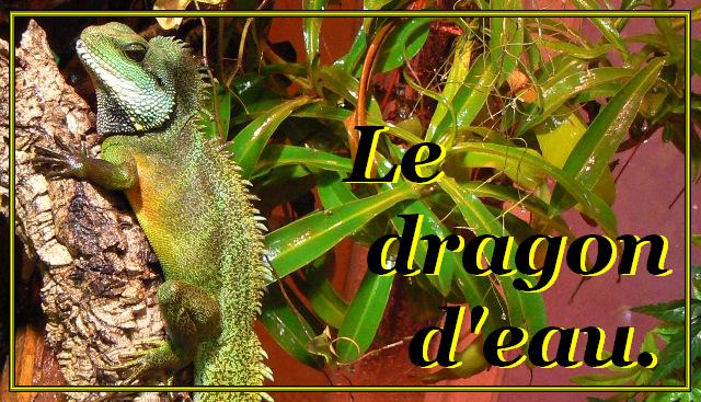DRAGON D'EAU: